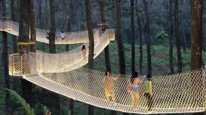 Wisata hutan pinus di Bandung